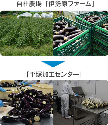 自社農場&平塚加工センター